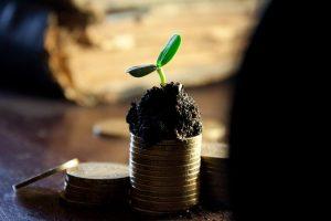 配当の収穫をイメージする写真(お金の上に育つ植物)