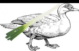 葱を背負った鴨のイラスト