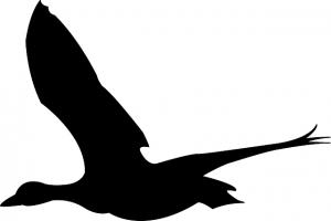 鴨が飛び立つイラスト